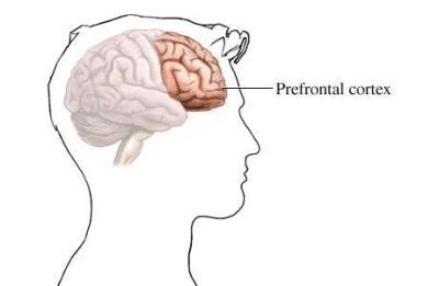 Cette partie du cerveau gère la cognition, les sensations et les émotions.